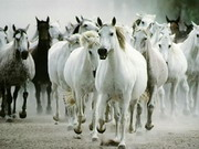 Online game White Horse Jigsaw